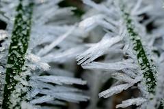 Eis-Gras