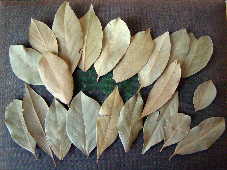21 bay leaves