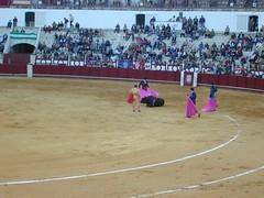 tradition(0.0), performing arts(0.0), animal sports(1.0), bull(1.0), sport venue(1.0), event(1.0), sports(1.0), bullring(1.0), entertainment(1.0), matador(1.0), performance(1.0), bullfighting(1.0),