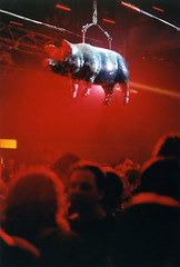 silberschwein