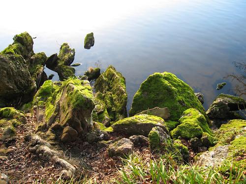 Moss moss moss by squacco