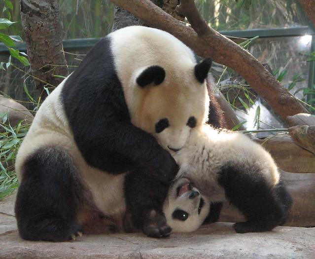 Cirque Du Soleil - Panda style.