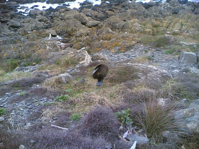 Header of a seal