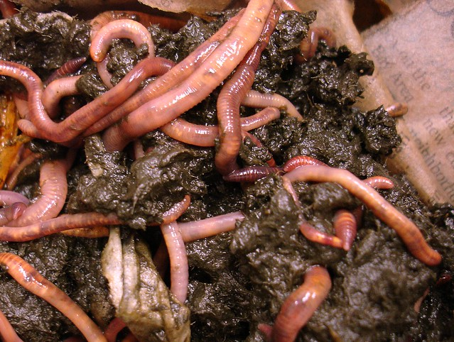 earthworms - photo #44