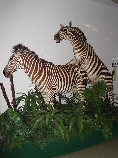 Zebra Porn. yup.