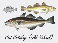 animal, fish, cod, fish, forage fish, oily fish,