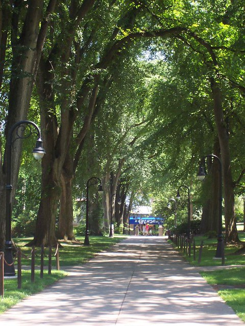 A nice walk in state college with large green trees in the summer. Find out where a nice walk is in State College, PA.