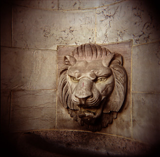 Fountain Lion