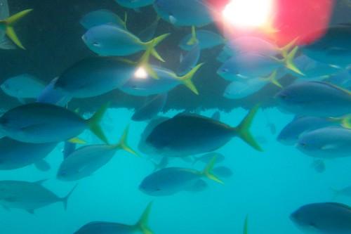 Fish of the reef by heyjoewhereyougoinwiththatguninyourhand