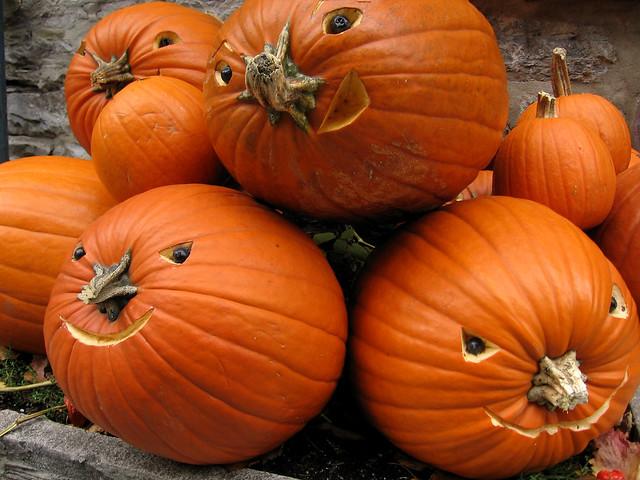 Pumpkin heads | Flickr - Photo Sharing!