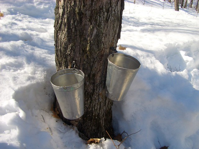 Maple Syrup Quebec Canada