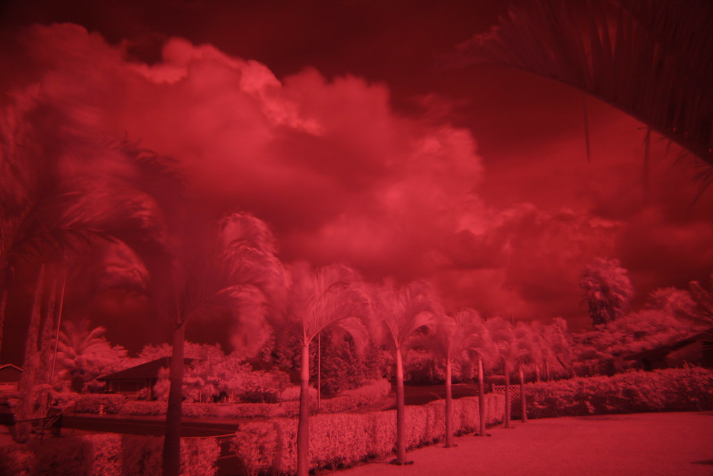Untouched Infrared Image Used for The Two Photos Above