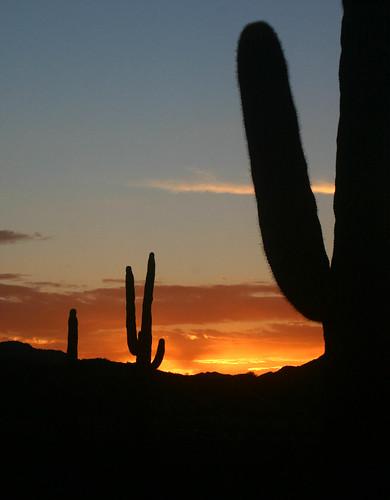 estrellamountainpark arizonasunsetsaguaro