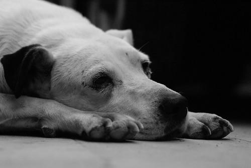 Mi triste perro