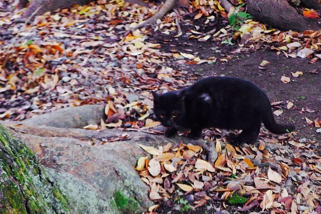 Today's Cat@2016-12-09