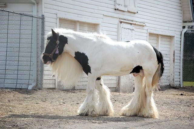 Braided horse
