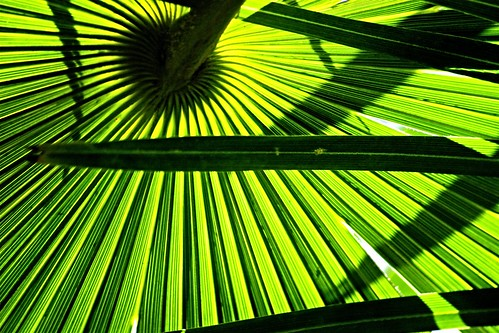 shadow abstract leaf stripes palm twtme favemegroup4 favemegroup6 top20green colourartaward colorartaward artlegacy