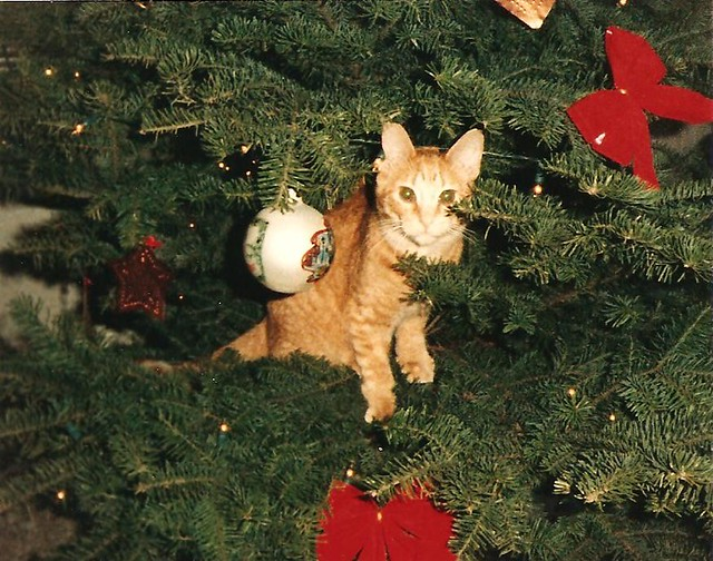 Barnaby in the Christmas Tree