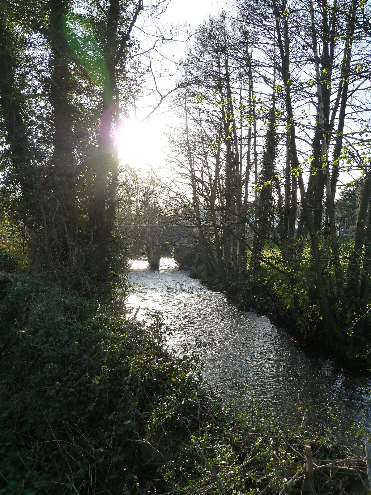 The Nadder River SWC Walk 250 Tisbury Circular via Alvediston