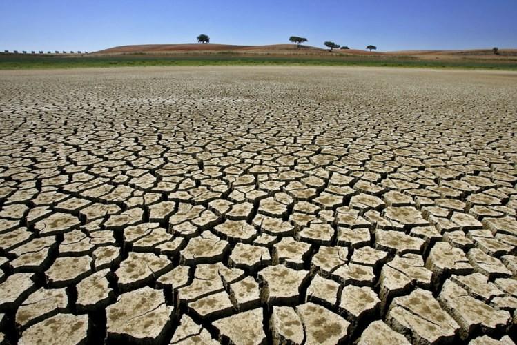 seca-nordeste-eletrikus-brasiliensis.jpg