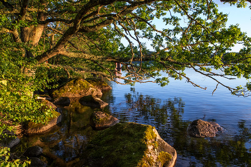 lake landscape oak sweden schweden shore sverige scandinavia östergötland boxholm sommen malexander östergötlandslän västantorp landsnäs