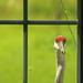 crane_at_window_2044b by pheneghan2000