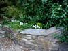 Cool white and green in shaded side garden by pawightm (Patricia)