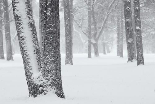 Trees in Snow - Pueblo City Park