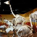 skeletons2-museum-arts