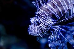 Aquarium of the Smokies-66