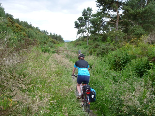 Elgin-Lossie Wood-Lossiemouth
