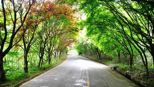 40 Parque Nacional en Gwangju (11)