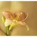 Le Parfum d'Une Femme  (Scent of a Woman) by l'imagerie poétique