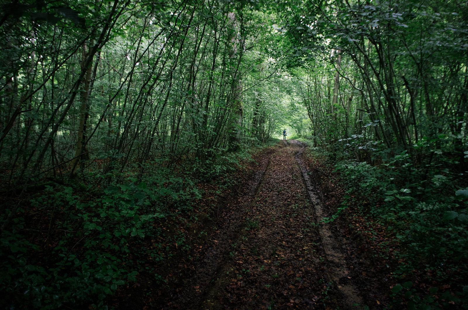 Le vent des forêts - art contemporain et randonnée en forêt