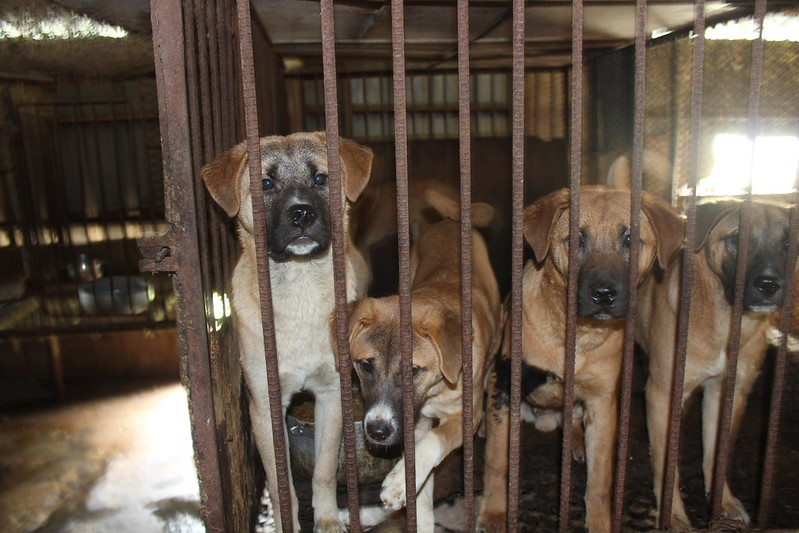 Dog Farm 2, Busan, Korea 2014 (1)