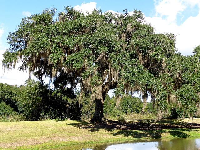 Avery Island / Willow Pond, Sony DSC-W730