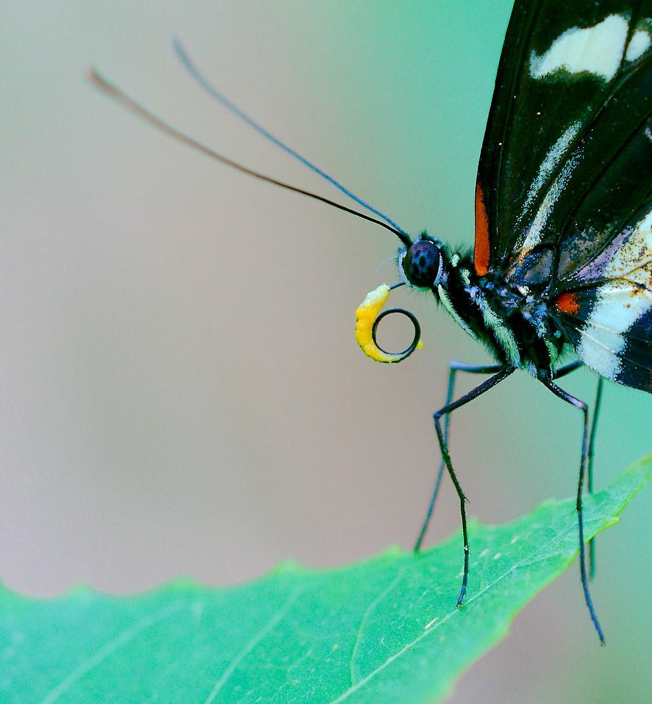 Butterfly_21_v2