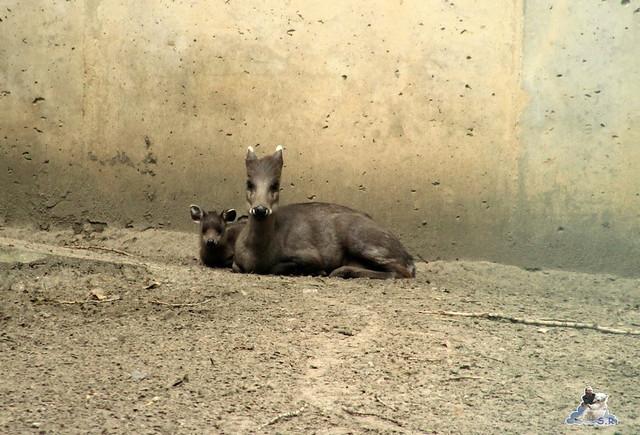 Tierpark Berlin 18.07.2015 0138