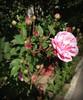 Há flores pelo caminho.