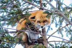 Sure I climb trees!