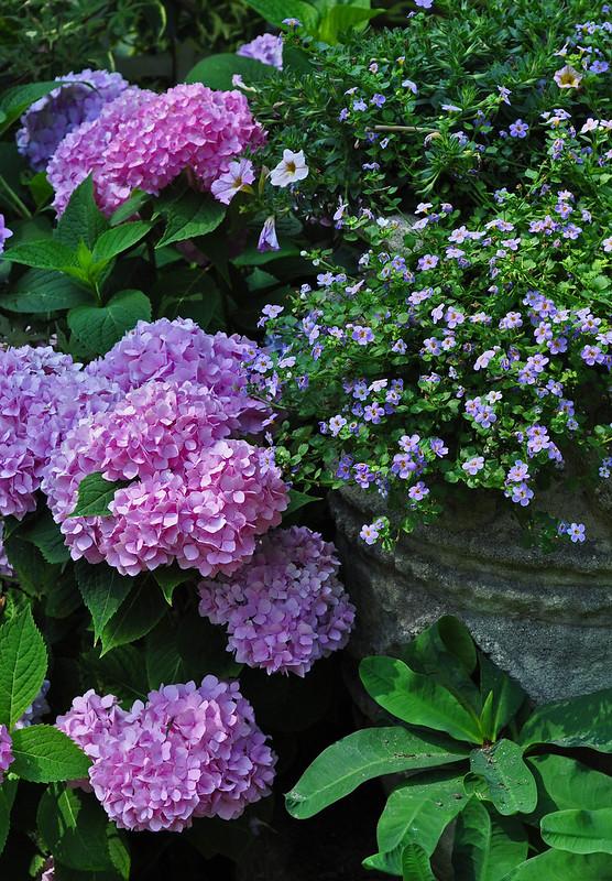 Hydrangea Planter (1)