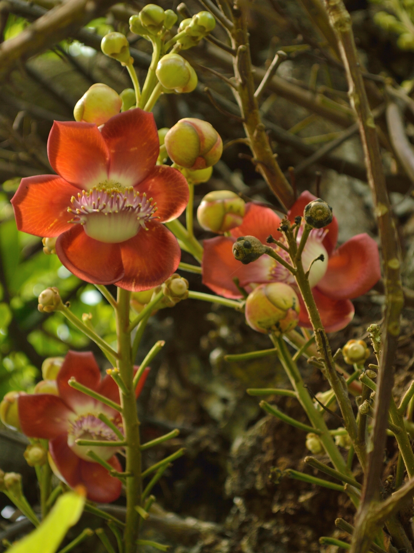 Grenada Botanical Gardens