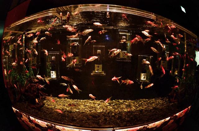 aquarium 😜