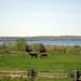 Rural and Agricultural | Ruralité et agriculture