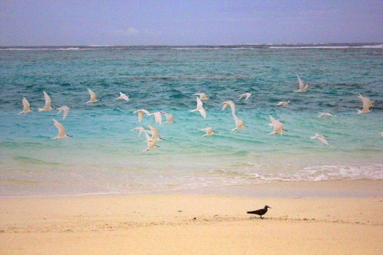 #travelbloggerindia #travelblogindia #travelblogmaldives #maldivestourism