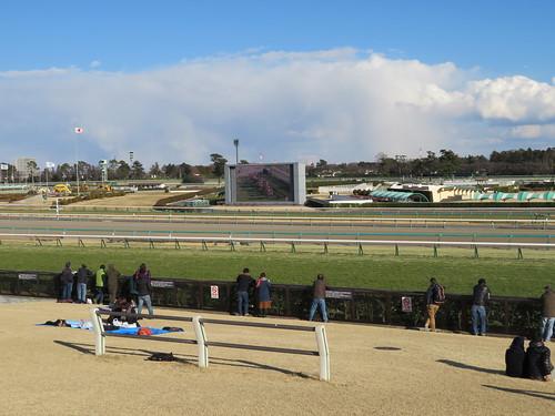 中山競馬場の芝スタンドから見るターフビジョン
