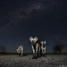 Spirits of the Night by Burrard-Lucas Wildlife Photography