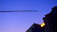 DC Dance of the Cranes 59105