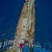 STS Leeuwin II by jezzamagee.9718