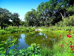 Belle's Pond